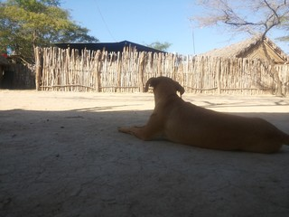 Perro posador