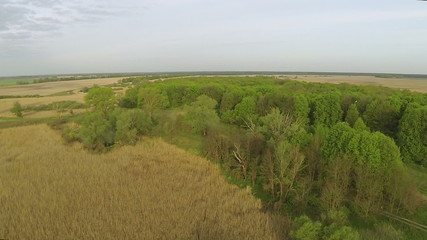Panorama of  wood and meadows with flying stork .Aerial