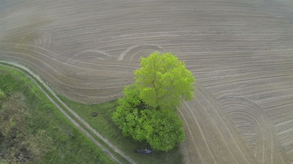 Over  opened rural  field and  alone tree. Aerial