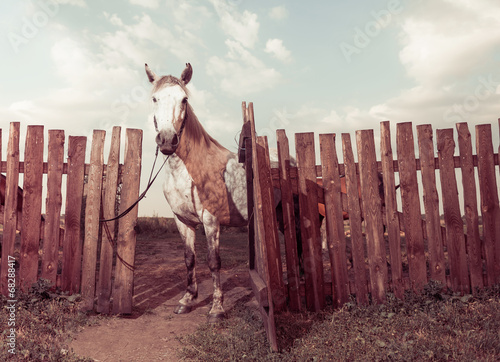 friendly horse at open fence