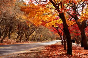 아름다운 가을단풍
