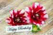 Happy birthday card with dahlia flowers