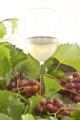 Weißweinglas und Reben