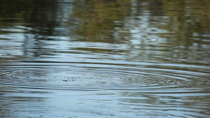 Hippo in water, Sabie-Sand nature reserve