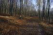canvas print picture - Buchenwald im Herbst