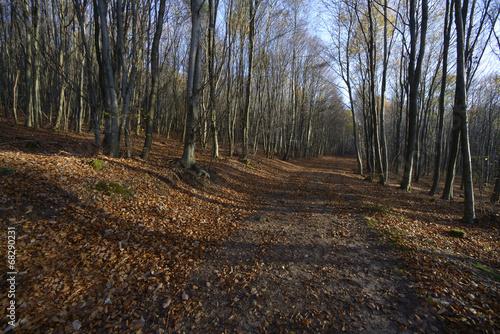 canvas print picture Buchenwald im Herbst