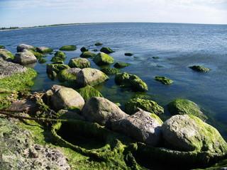 Seaweed on rocks at beach