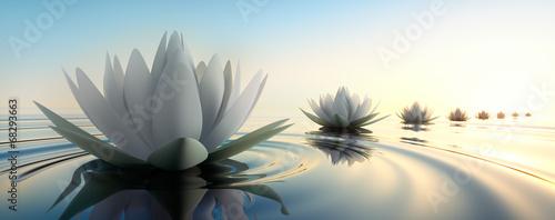 Lotus im See - 68293663
