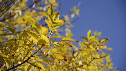Close up autumn leaves over blue sky background