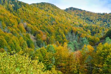 Irati forest in autumn, Navarre (Spain)