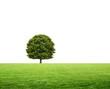 Baum auf dem Feld freigestellt