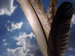 feathers in the sunlight