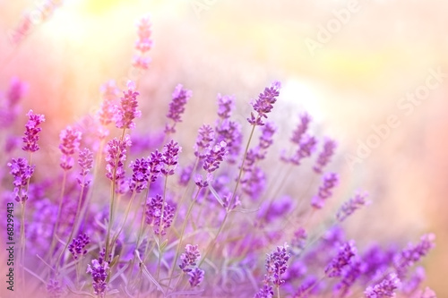 Deurstickers Lavendel Soft focus on lavender