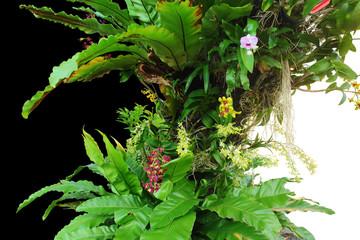 exotic vegetation