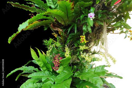 canvas print picture exotic vegetation