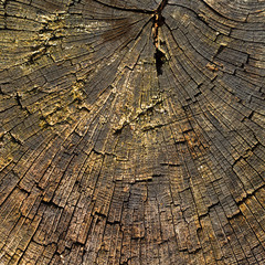 Nature. Trunk of old tree as background texture