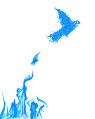 flame bird flying from blue flire isolated on white