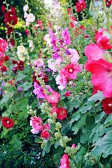 Flower garden - paradise