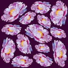 Paeonia suffruticosa peony ornament flower