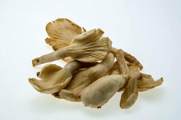 oyster mushroom on white background