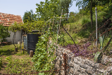 Mediterranean yard with stone wall, grapes and more