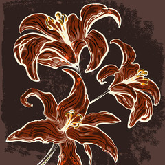 The lillies branch drawn in vintage style