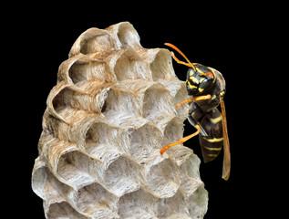 Small wasp 9