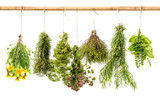 fresh healthy herbs hanging isolated on white background