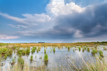 rain clouds over swamp