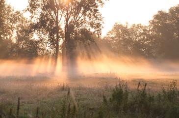 misty sunrise over summer meadow