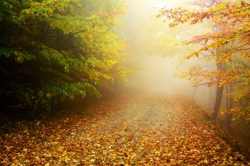 Mountain road in autumn colours