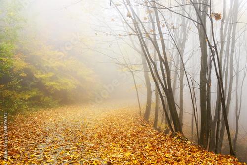 Mountain road in autumn colours © Rechitan Sorin