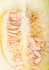 Makroaufnahme einer Cantaloupe Galiamelone