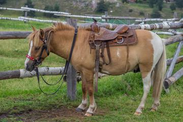 Horse with beautiful saddle 2
