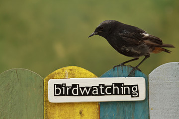 Bird perched on a fence decorated with the word birdwatching