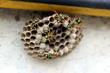 nido di api