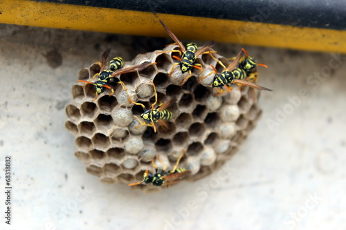 In de dag Bee nido di api