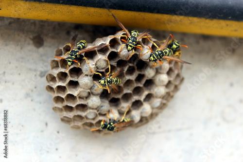 Spoed canvasdoek 2cm dik Bee nido di api