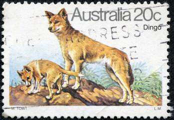 stamp printed in the Australia shows Dingo
