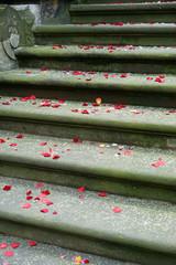 Hochzeit - Rosenblätter und Reis auf der Treppe