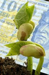 Jack and the Beanstalk 傑克與豌豆 Jack e la pianta di fagioli