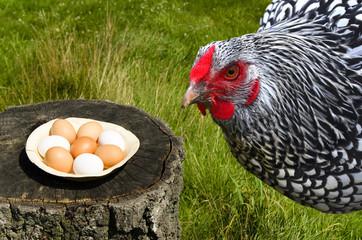 Huhn und Bio-Eier