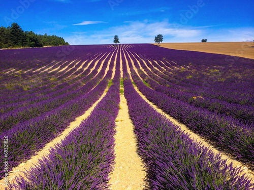 lavender in south of France © beatrice prève