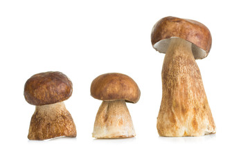 Boletus, mushroom isolated on white background