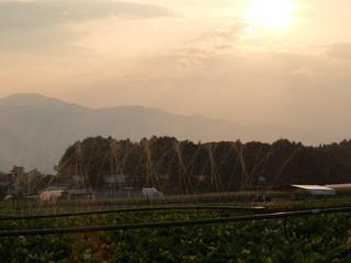 散水 畑 夕陽