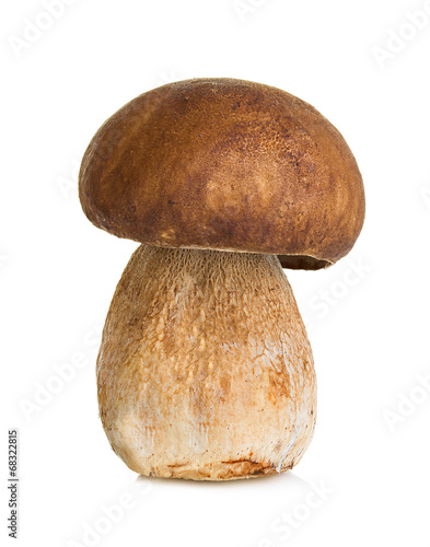 Boletus, mushroom isolated on white background - 68322815