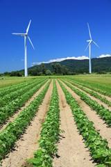 畑にそびえる風車