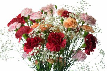 バラの花束 白背景
