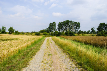 Farm track through fields