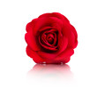 Obrazy na płótnie, fototapety, zdjęcia, fotoobrazy drukowane : Rote Rose